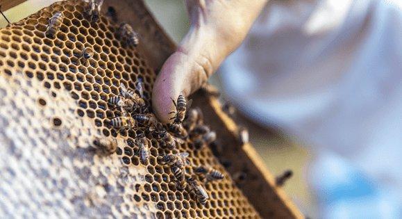 Emballage pain d'épices spécial pour les apiculteurs